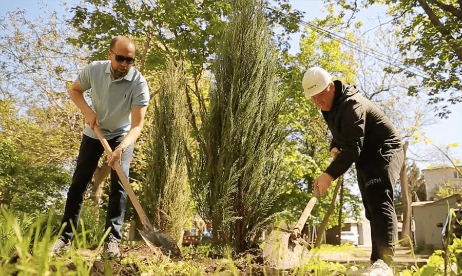 Высадка деревьев на Спортивном переулке
